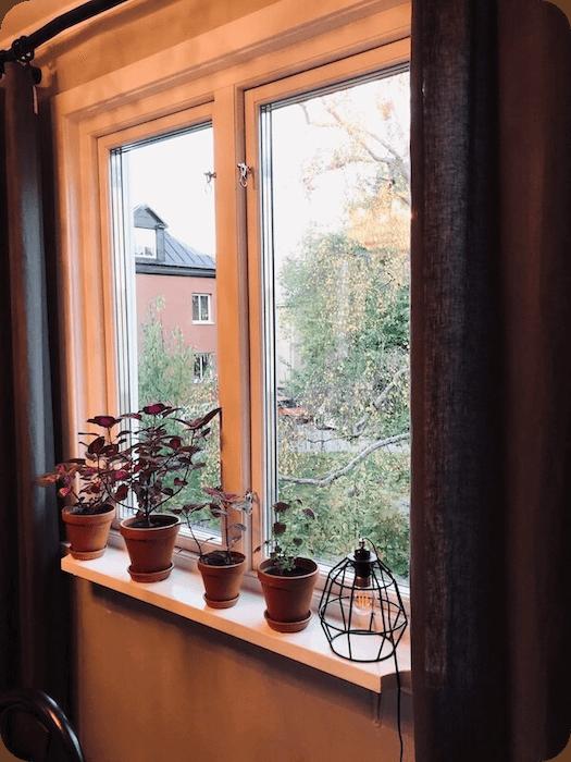 Fönster efter fönsterbyte - Renoverad fönsterbräda