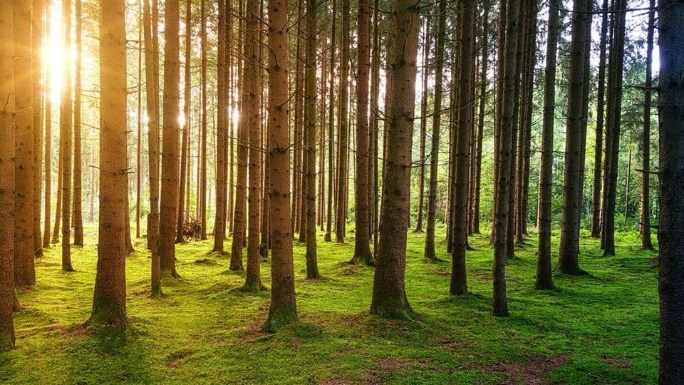 bra fönster med bra skog